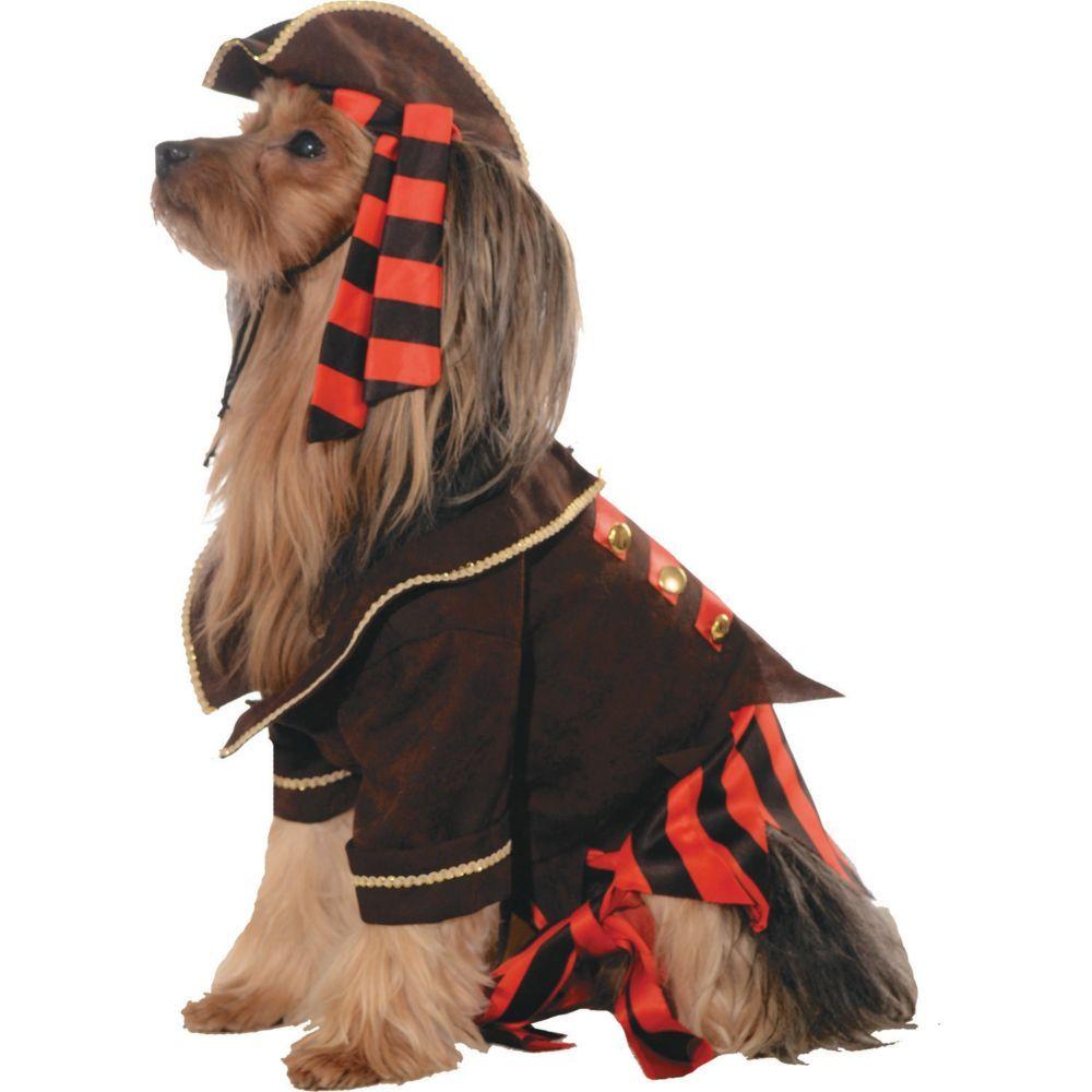 Original Treasure Chest Dog Costume Idea Dog Costumes Funny Dog