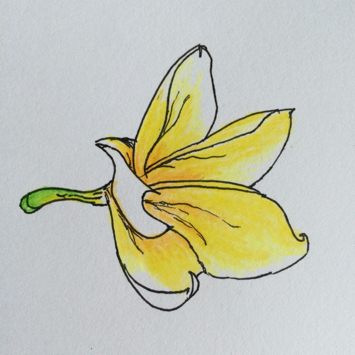 Kamboja Flower In Color Draw By Me Media Drawing Pen And Pencil Color