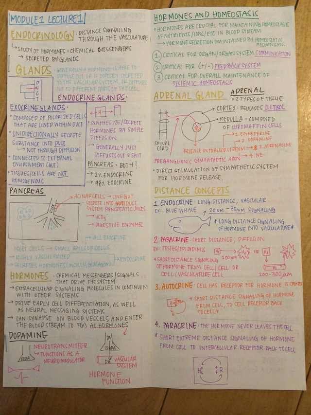 Module 1 Lecture Notes - Imgur | School | Pinterest | School