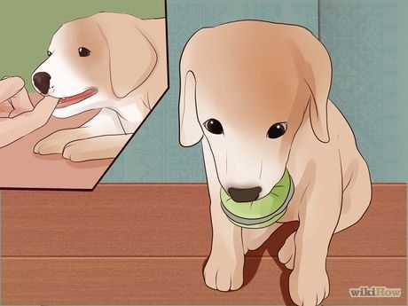 Stop Puppy Biting Puppy Biting Stop Puppy From Biting Training