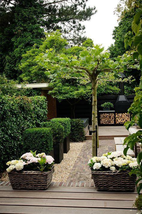 De Geheime Tuin Beauty Landscapes Trees Tuin Ideeen Pinterest