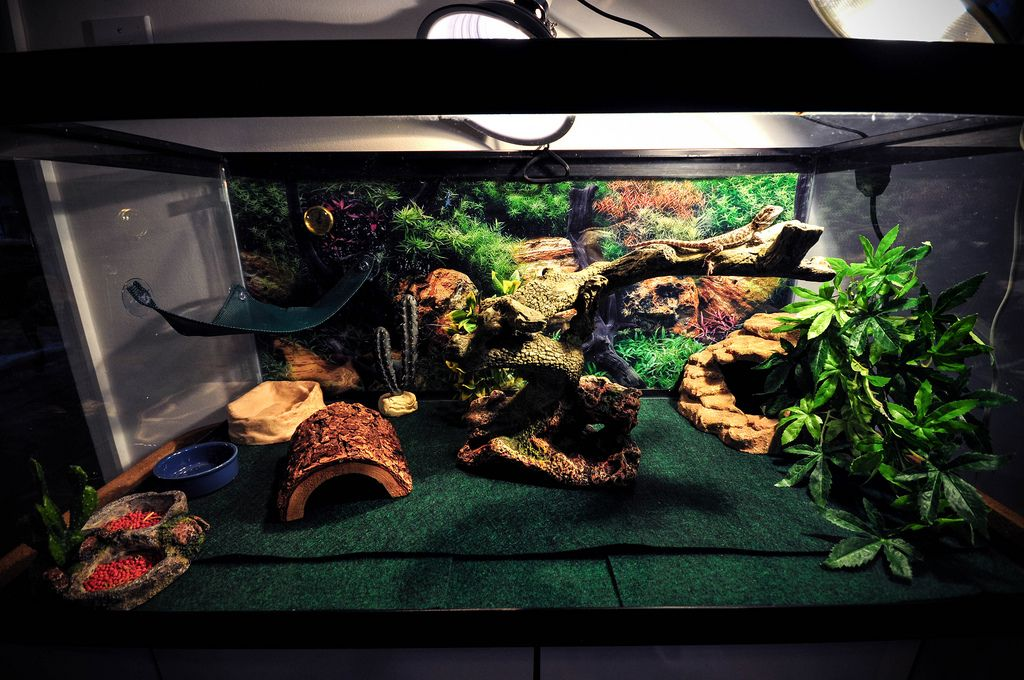 Bearded Dragon Setup 40 Gallon Google Search Beardie