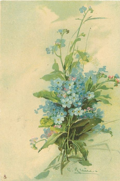 Blue forget-me-nots by Catherine Klein ~ 1905.