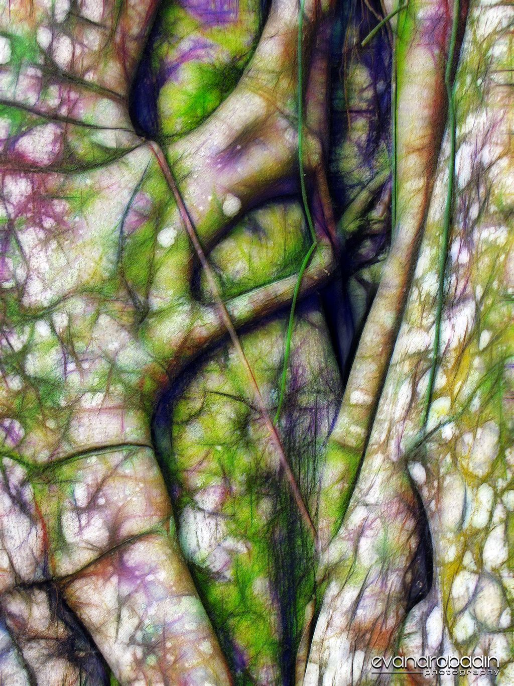Simbiose - Figueira