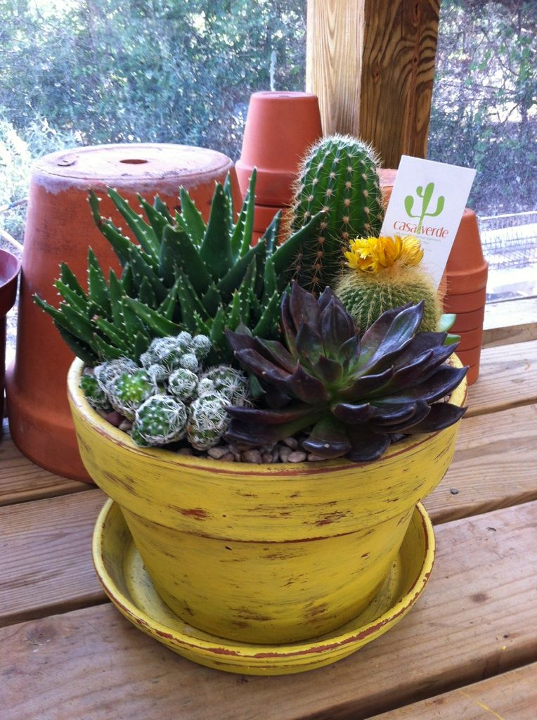 Cactus succulent arrangement 4 delivery inside my greenhouse pinterest cactus album and - Terras arrangement ...
