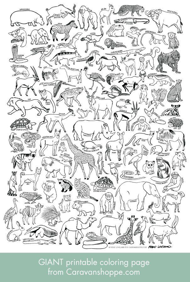 100 AFRICAN ANIMALS giant coloring poster   AA- Unsortiert ...