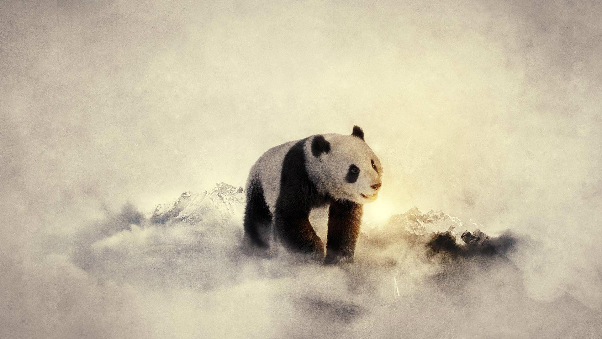Beautiful Panda 3D Wallpaper Panda bears wallpaper