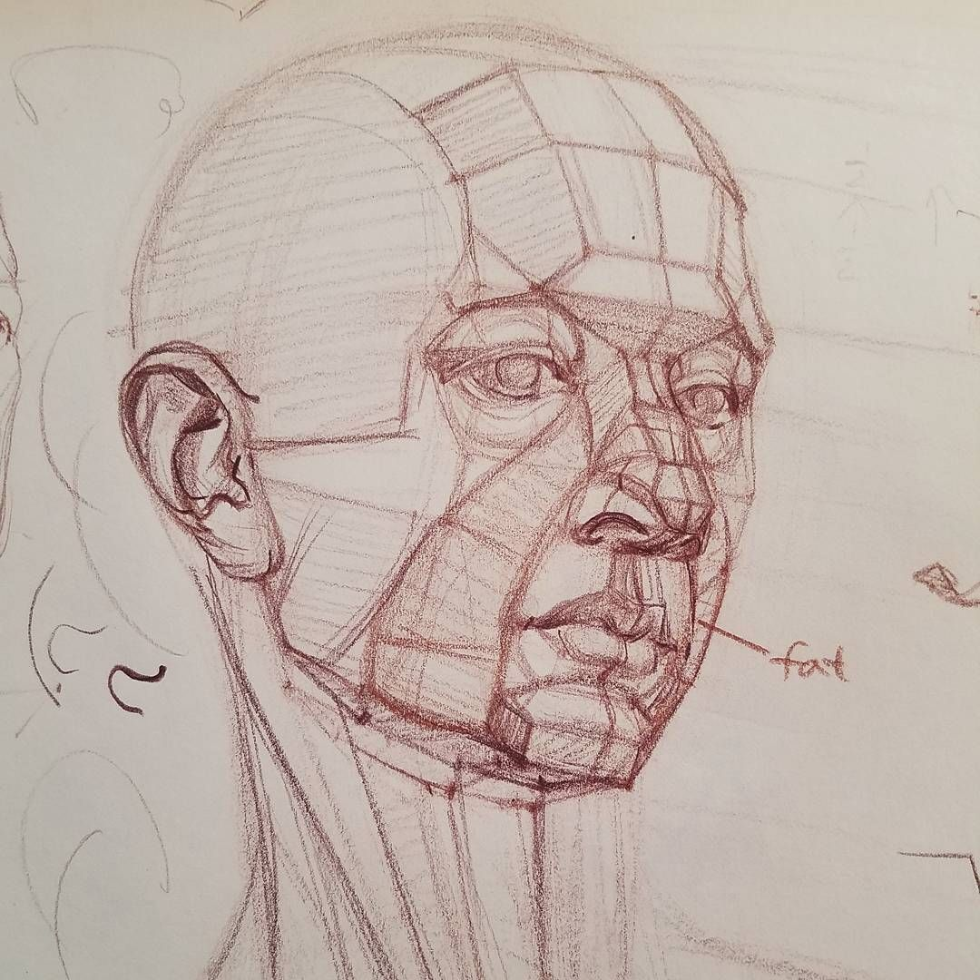Head structure demo in a student\'s pad | Anatomy | Pinterest ...