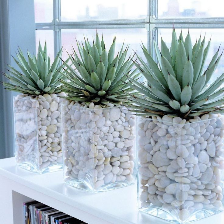 Interior plants  EVERYTHING ON THE VIEW It can be interesting not only what protrudes from the pot but also what is inside Put white stones and gravel into the glass dish...