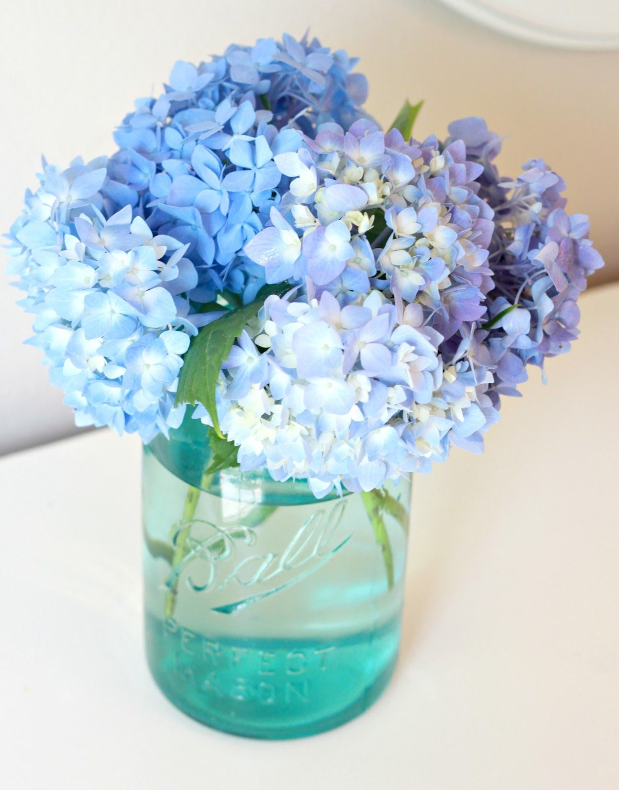 how to stop hydrangeas from wilting