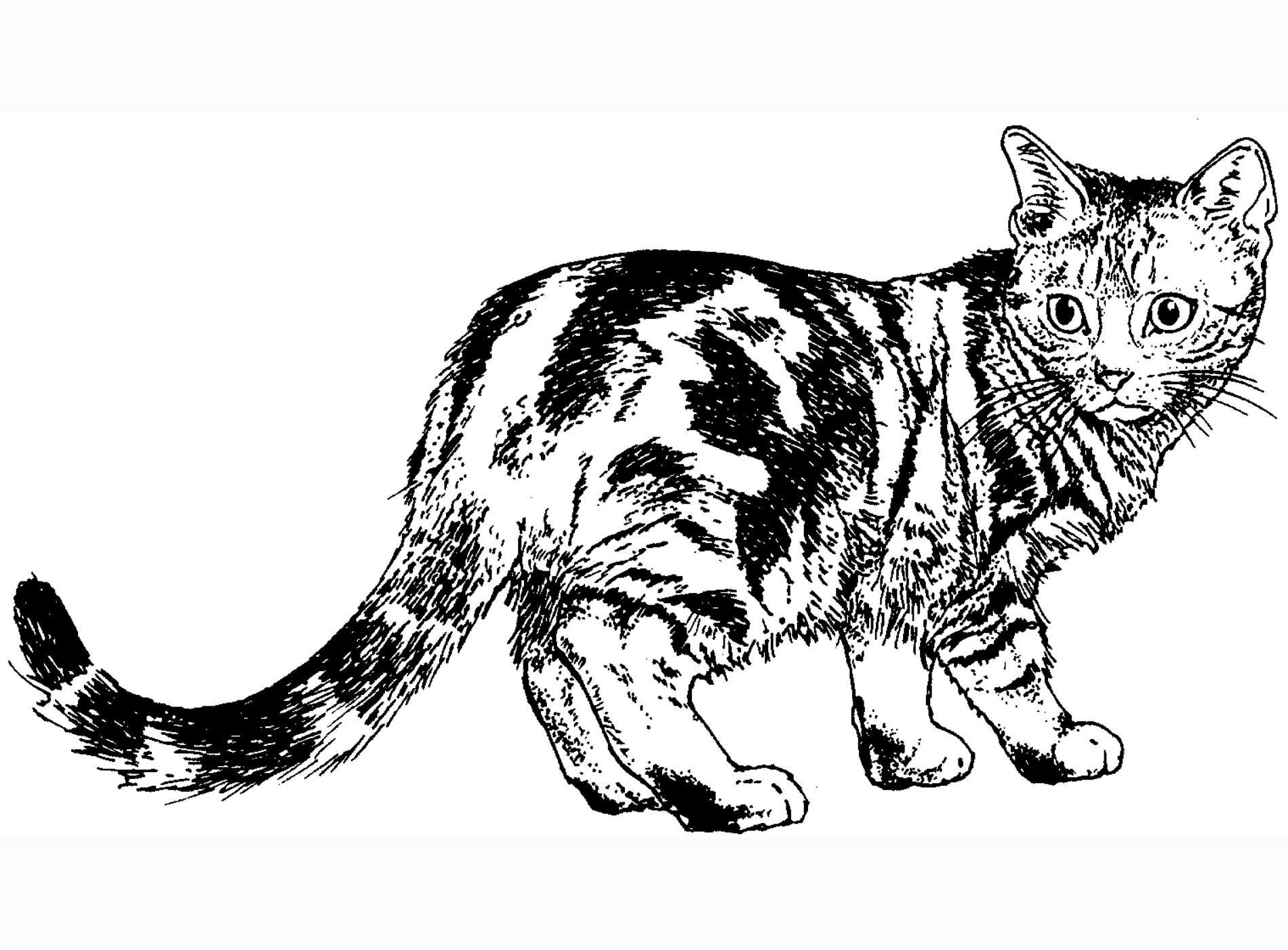 cat coloring pages cat black white coloring page