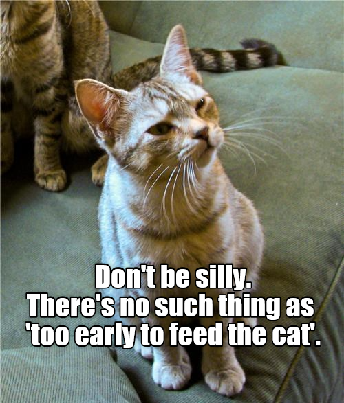 Image result for it's never too early to feed the cat meme