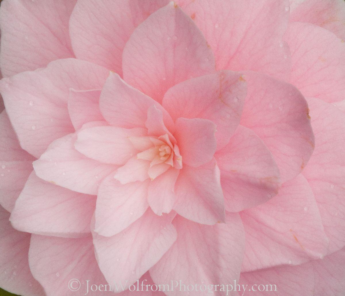 Flowers pretty in pink 21 joen wolfrom photography flowers flowers pretty in pink 21 joen wolfrom photography mightylinksfo
