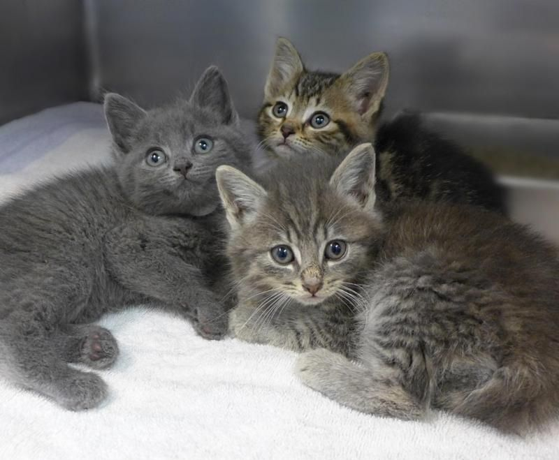 Kitten Season Has Begun That Means We Need Foster Homes For