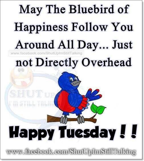 Funny Tuesday Quotes: Happy Tuesday, Tuesday And Tuesday