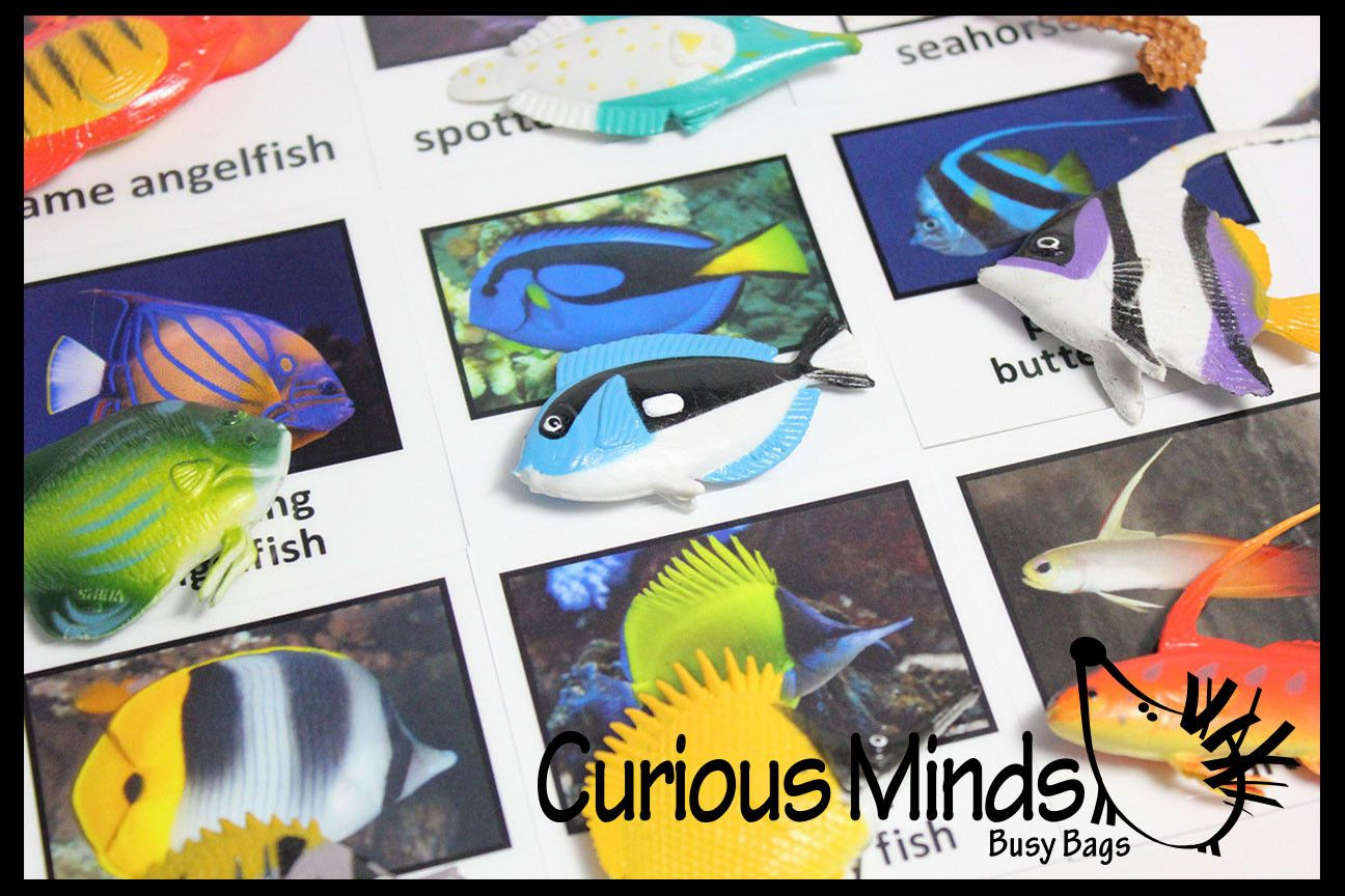 Montessori Tropical Fish Animal Object Match