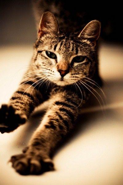 Irresistible tabby-kitty
