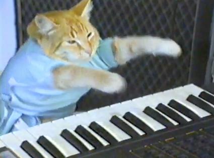 Keyboard Cat Cats Cat Gif Crazy Cats