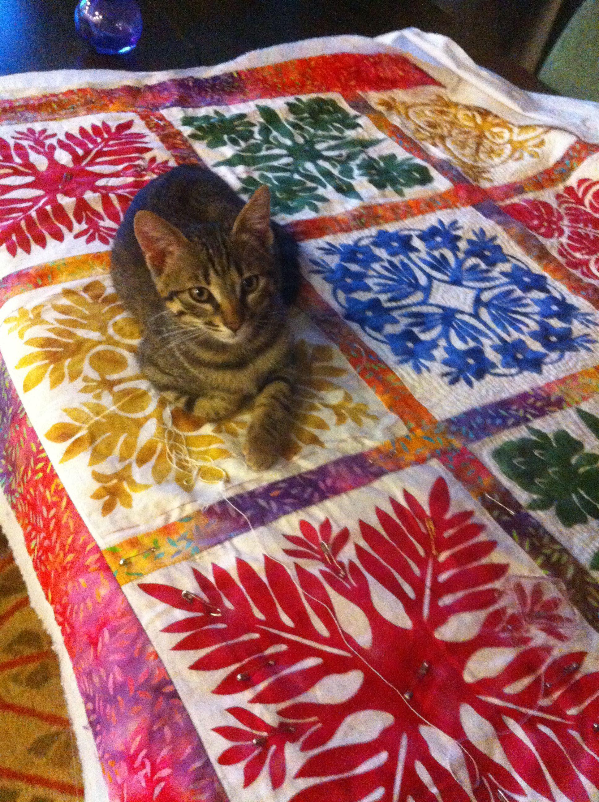 Hawaiian quilt and cat   Hawaiian Quilts   Pinterest   Stoffe, Nähen ...