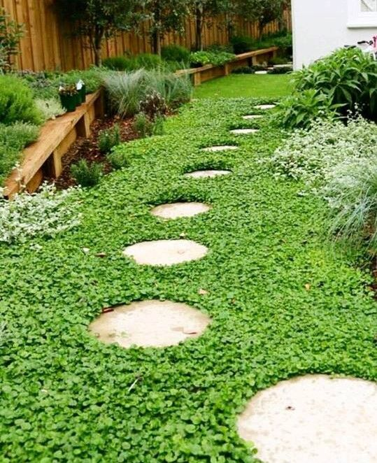 from Sticks and Stones Landscape Design. The no mow Dichondra repens lawn  looks fabulous, - From Sticks And Stones Landscape Design. The No Mow Dichondra Repens