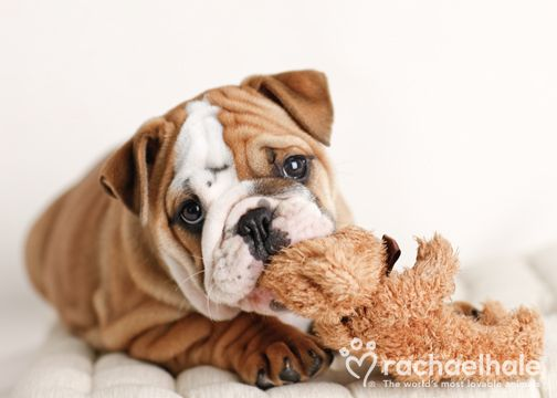 If You Ever Feel Lonely Consult Your Teddy Bear Photo By