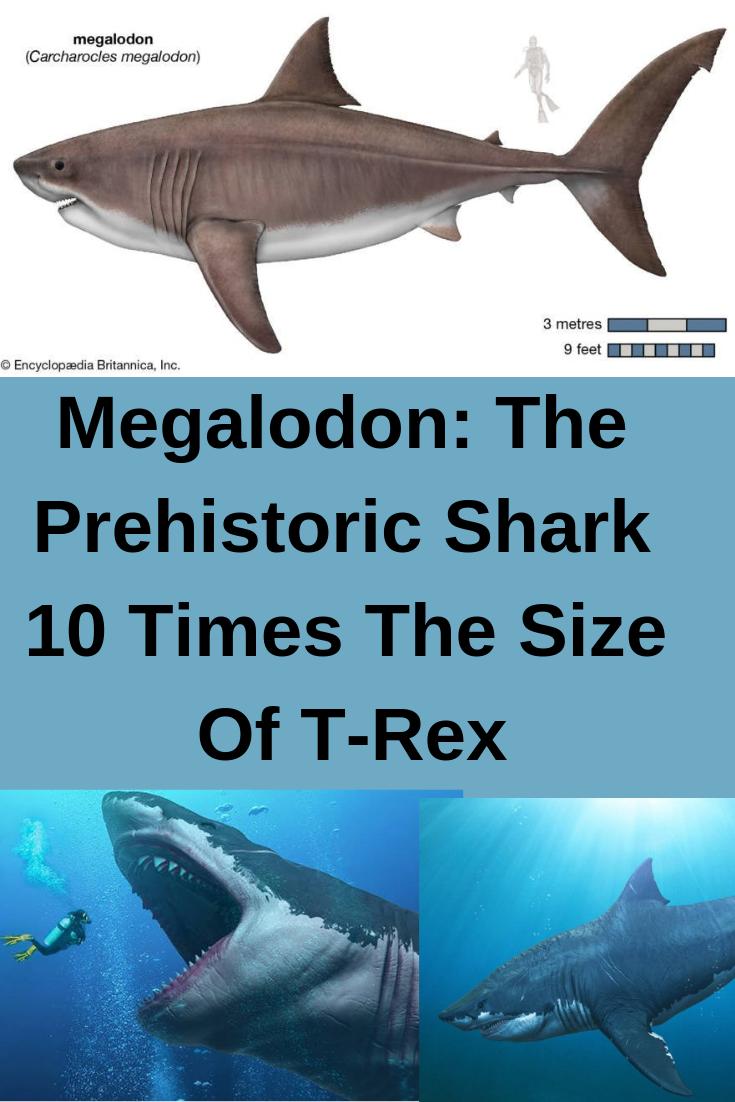 Pag Mega Shark Infographic   Asdela