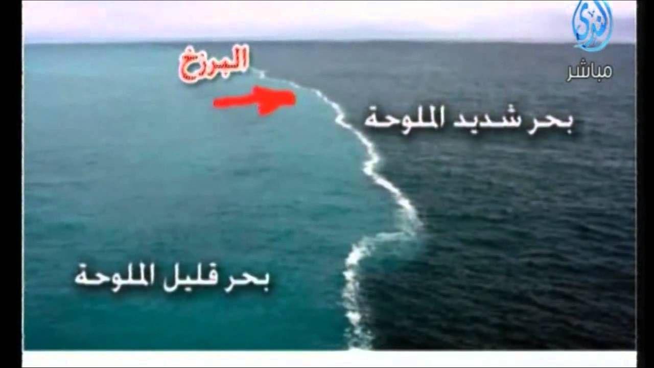 مرج البحرين يلتقيان العلماء ييستخدمون ألفاظ القرآن Islamic Videos Weird Plants Trees To Plant