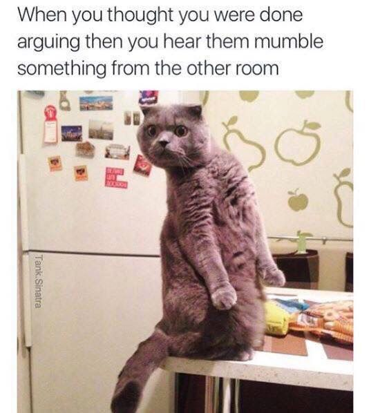 Pin By Abi Clark On Silly True Funny Animal Jokes Funny Cat Memes Funny Animal Memes