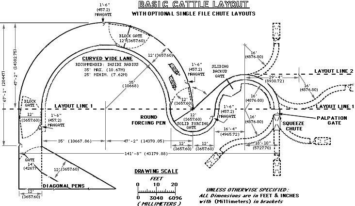 basic cattle layout temple grandin farming cattle. Black Bedroom Furniture Sets. Home Design Ideas