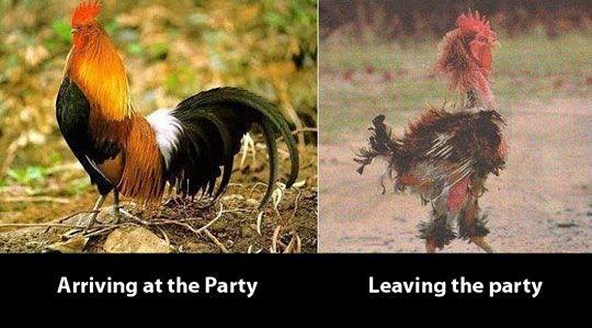 bc76b307477e599f758ca539e442307f - Free funny after party photos
