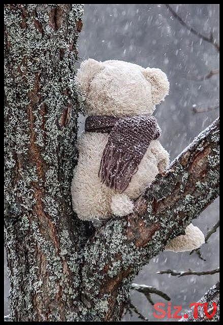 So ein einsames Bild ………,  #Bild #ein #einsames #Winterbilderweihnachten