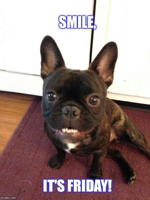 Pin On Funny Frenchie Memes