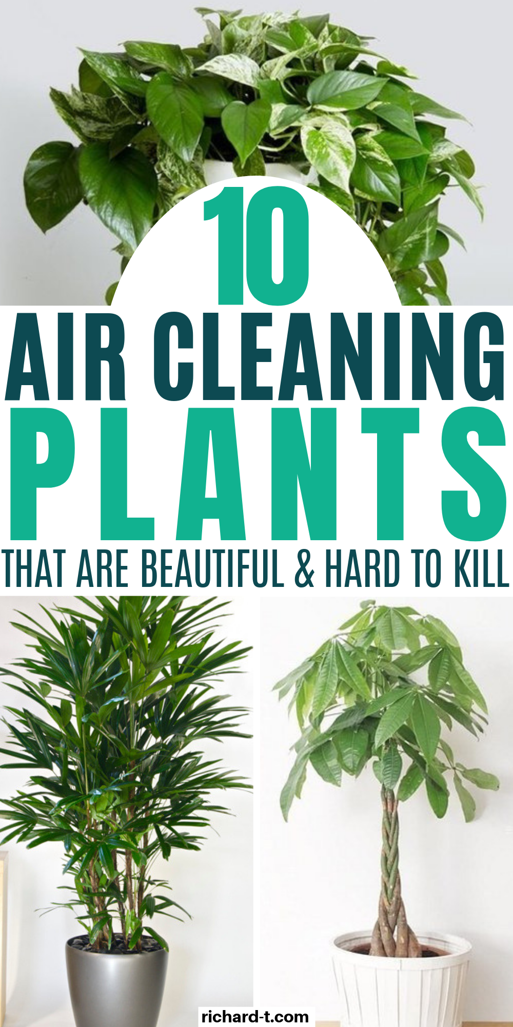 10 Indoor Air Cleaning Plants That Look Amazing & Filter Your Air All Day #plantsindoor