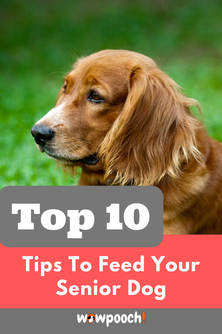 Best Dog Foods For Older Senior Dogs Dry Cannedspecial Nutritional Requirements For Older Senior Do Dog Food Recipes Best Dog Food Best Dog Food Brands