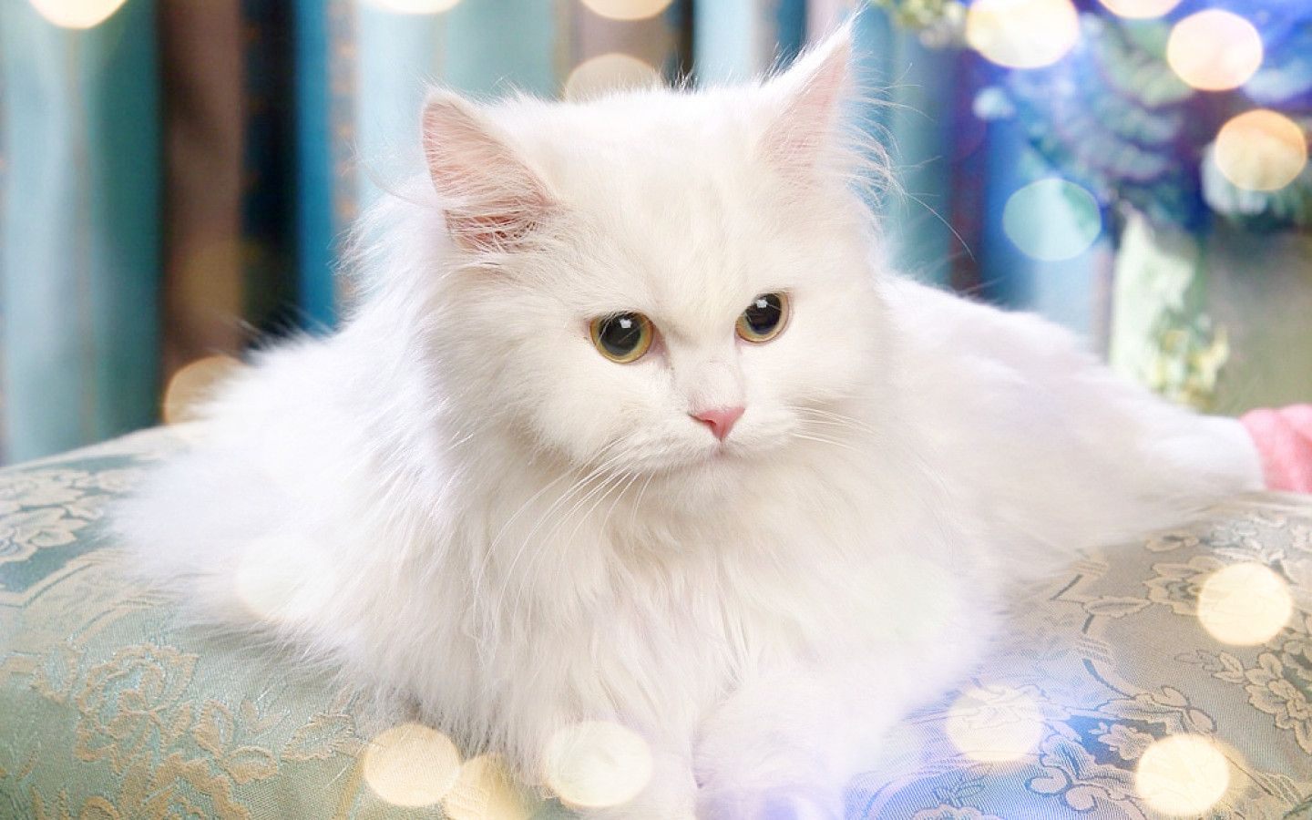 Fluffy White Cat With Images Cute Fluffy Kittens Fluffy
