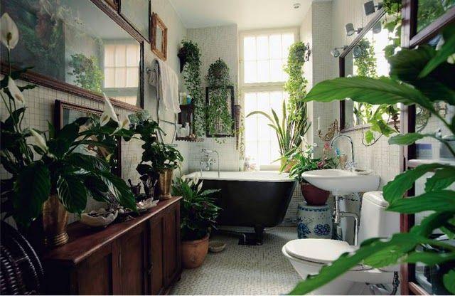 I the bathroom plants--like a tropical rainforest ... Rainforest House Plants on