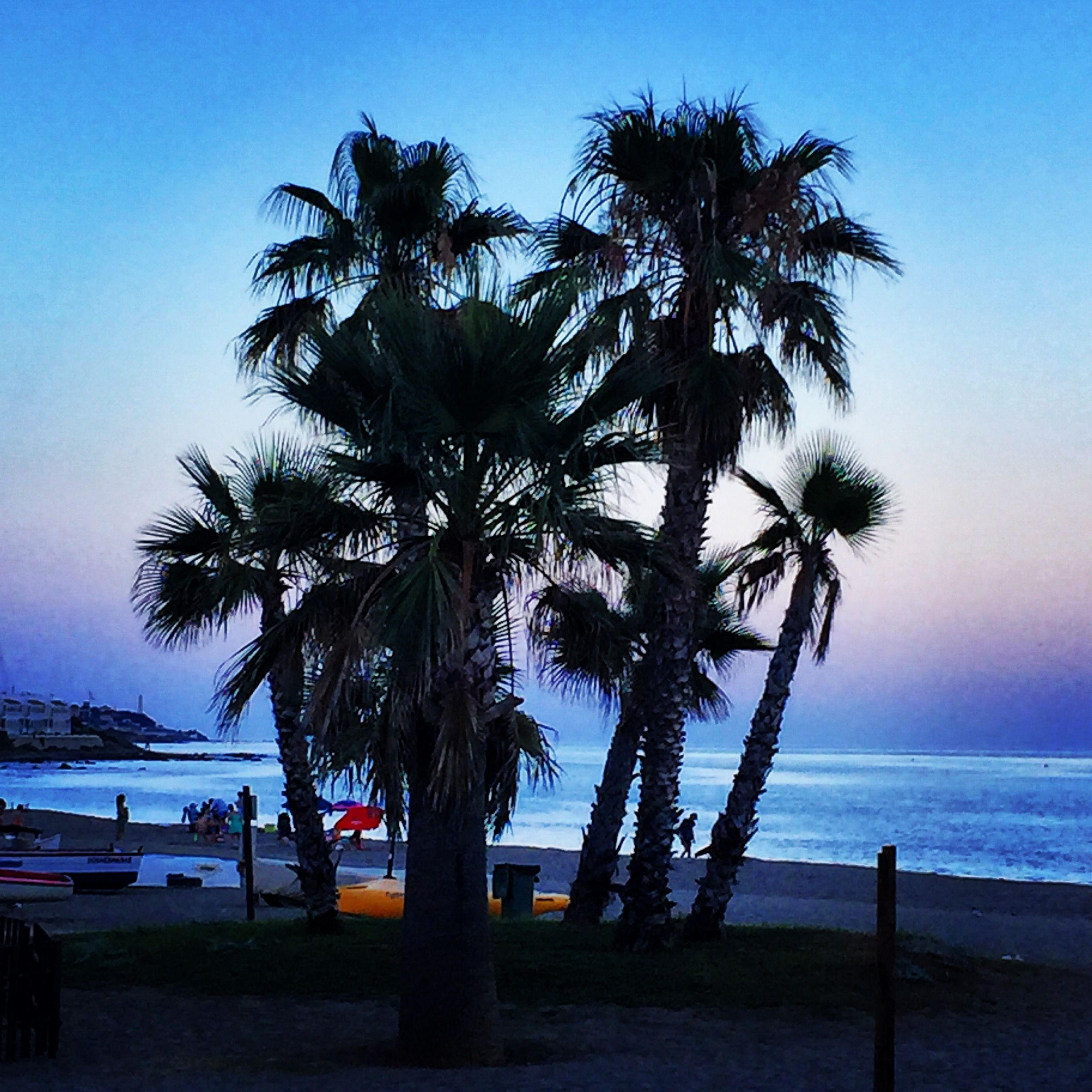 La Cala de Mijas in Andalucia, Spain. At the beach at sunset under the palm trees. A great place to eat and shop and relax.