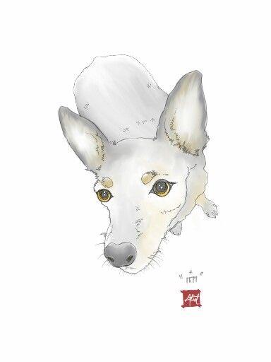 ป กพ นในบอร ด Animal Sketch