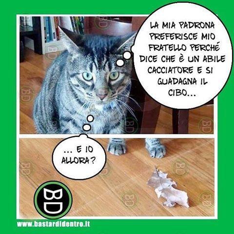 #gatto geloso? #bastardidentro #tagga i tuoi amici e #condividi le risate! www.bastardidentro.it