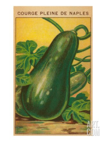 cartoon illustration of  Zucchini seeds | French Zucchini Seed Packet Print