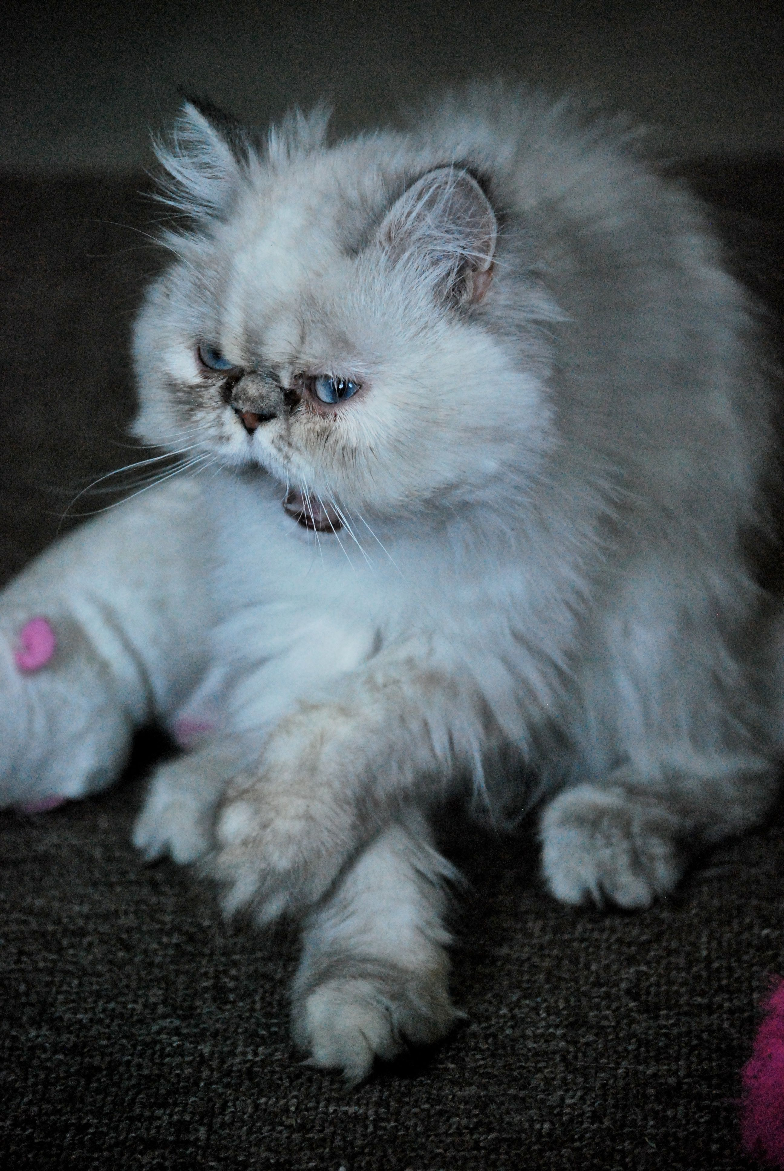 Cat Scratching Tips How to Prevent and Stop Why do
