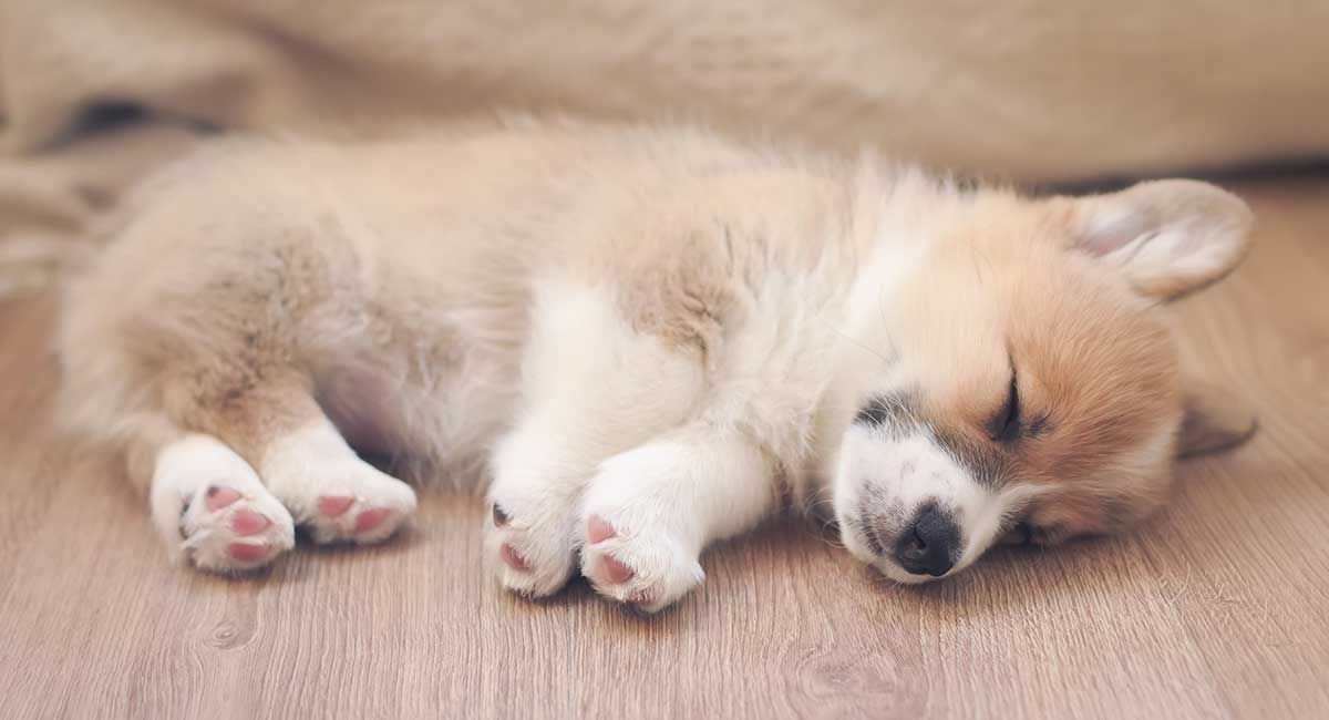How to get a puppy to sleep and reclaim your quiet nights