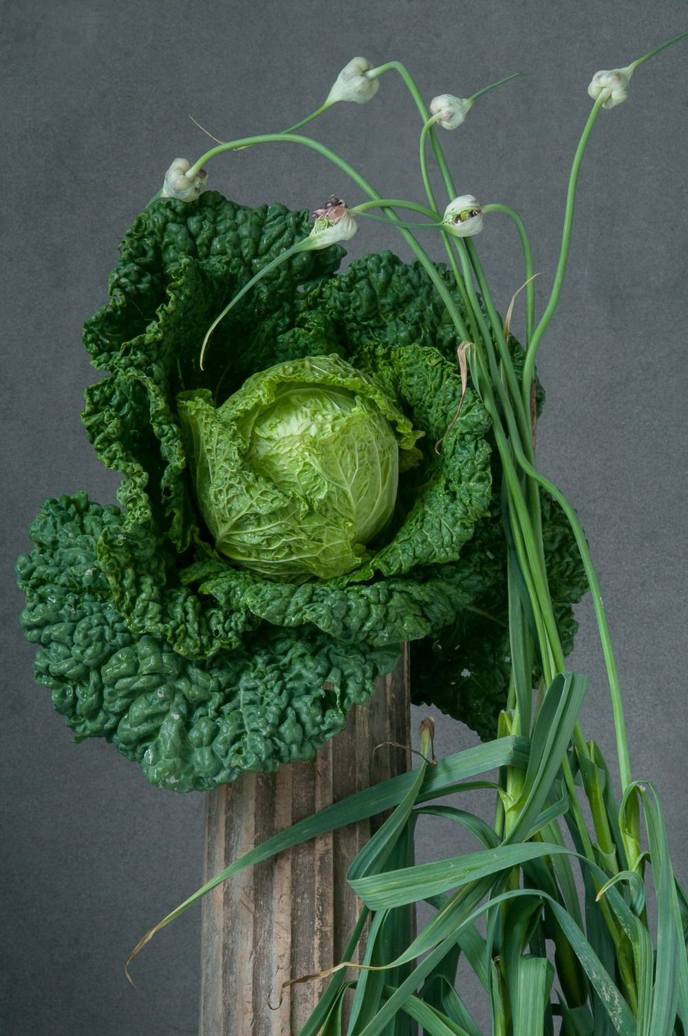 Savoy Cabbage & Garlic, from her Pedestal series by Lynn Karlin ©. All rights reserved