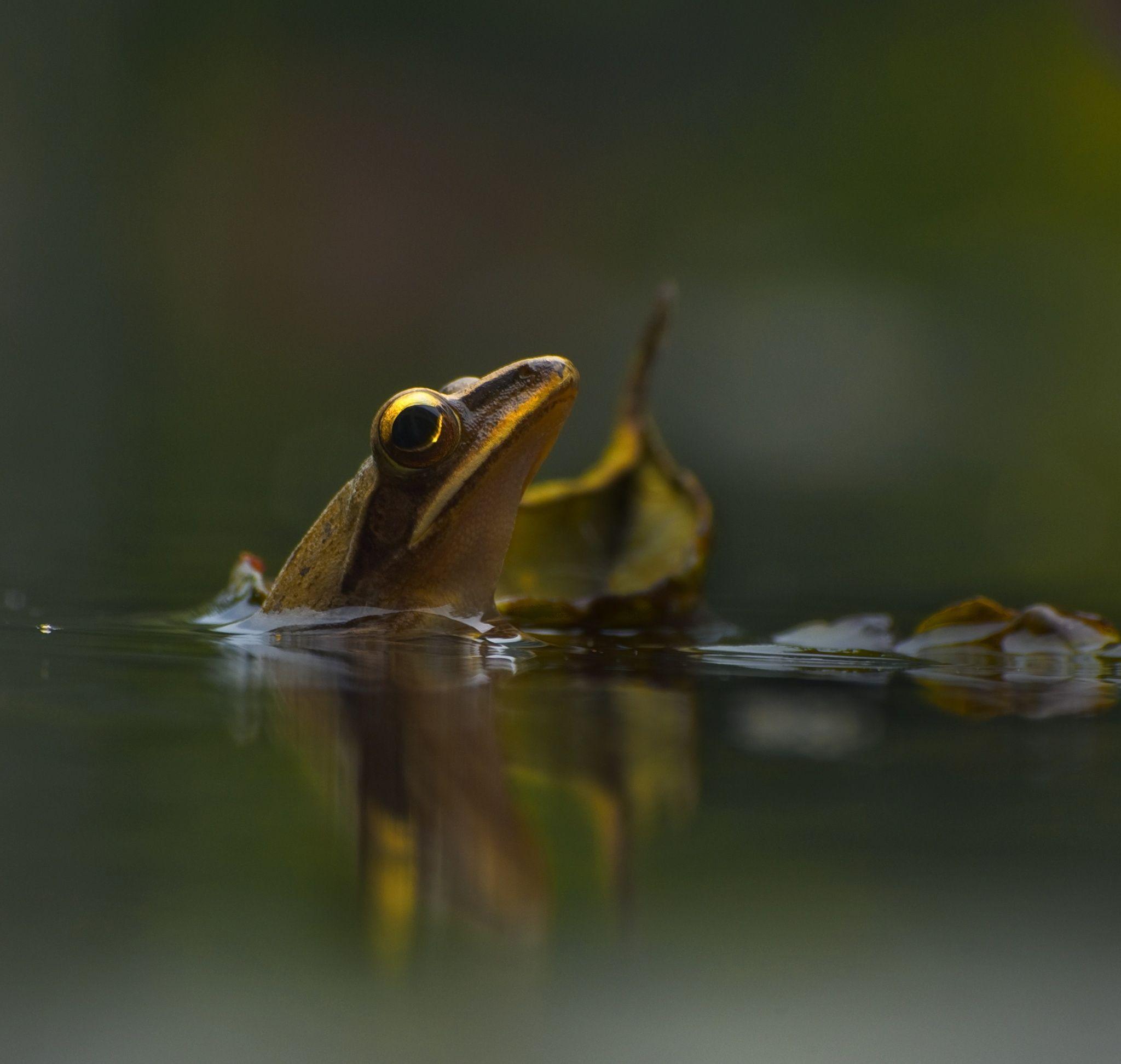 Pin på Photography Animals
