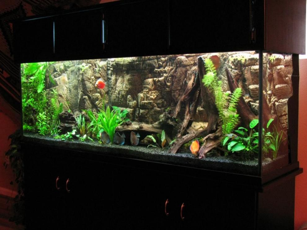 amazing tank with ex&le of great use background plants and driftwood & 199 best Aquariums-Fish Tanks-Ponds images on Pinterest | Fish ... azcodes.com