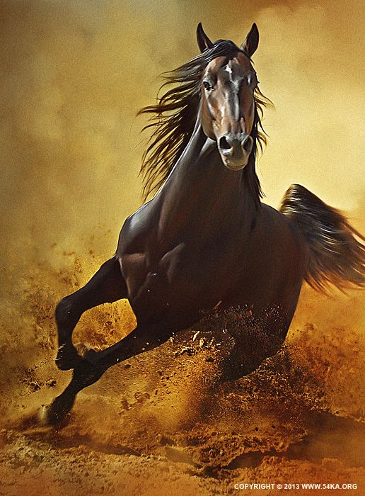 aeeabcbbd54 Galloping Horse at Sunset in Dust by Dimitar Hristov (54ka)