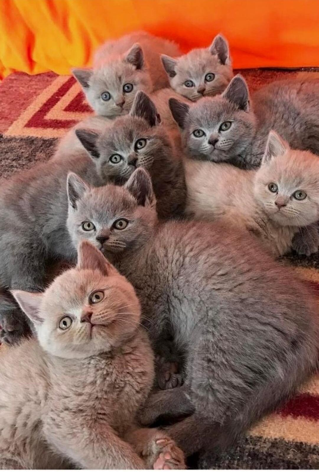 Beauty lies in every living thing cute cats