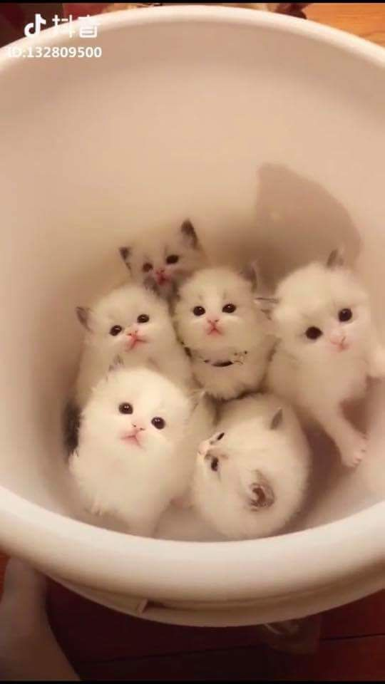 this are cutest cats i ever seen