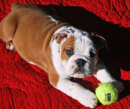 Find The Right Puppy Treat For Your New Pet Cute Puppy Names