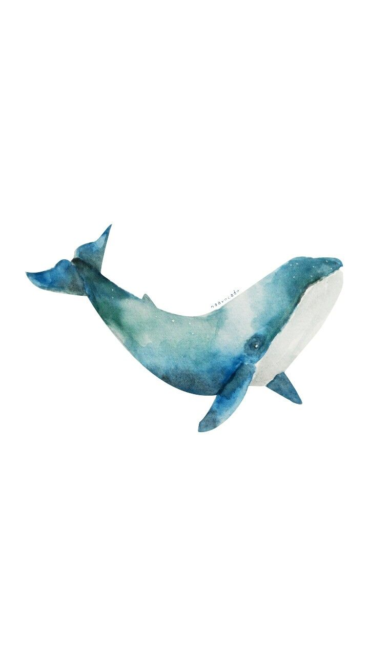 Naavocado Whale Watercolor By Me Illustration Wallpaper